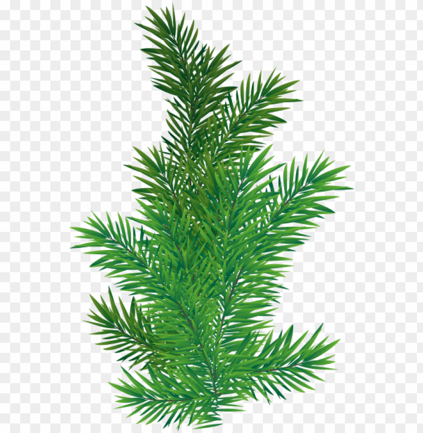 free PNG 0, - pine tree branch PNG image with transparent background PNG images transparent