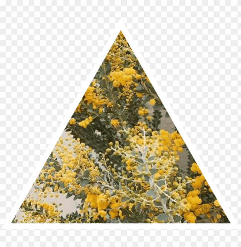 free PNG aesthetic yellow nature triangle flowers plants gr - png aesthetic nature transparent PNG image with transparent background PNG images transparent