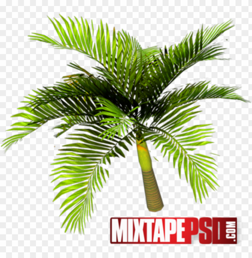 alm tree top view psd download - palm trees PNG image with