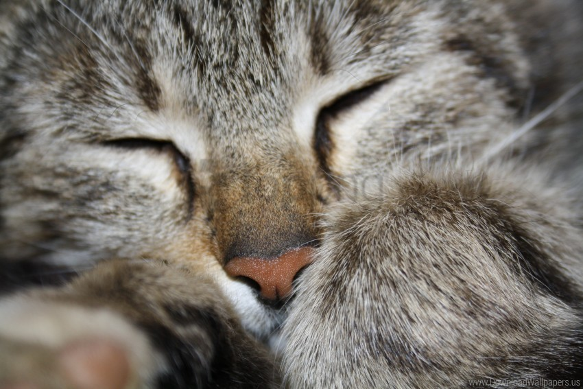 free PNG animals, cat, macro wallpaper background best stock photos PNG images transparent