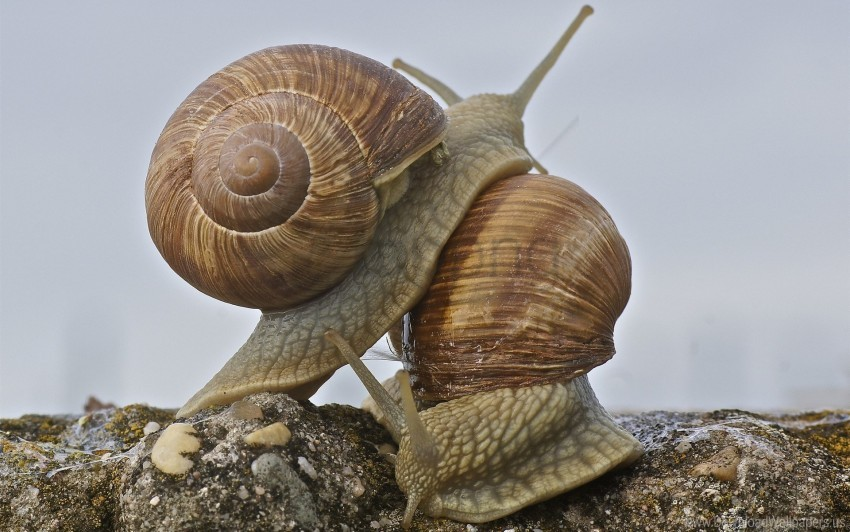 free PNG antennae, shell, snail wallpaper background best stock photos PNG images transparent