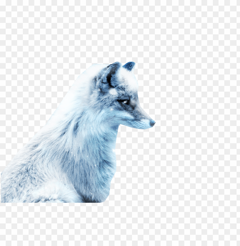 free PNG Download arctic snow fox png images background PNG images transparent