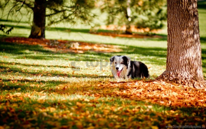 free PNG autumn, dogs, grass, hide, tree wallpaper background best stock photos PNG images transparent