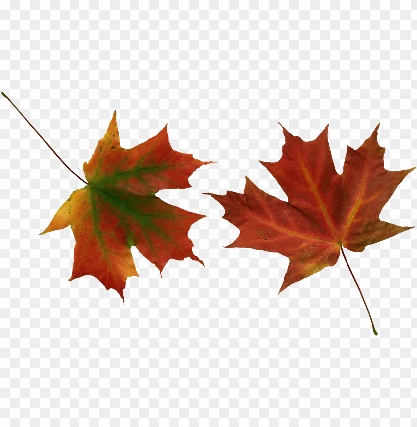free PNG autumn leaves PNG images transparent