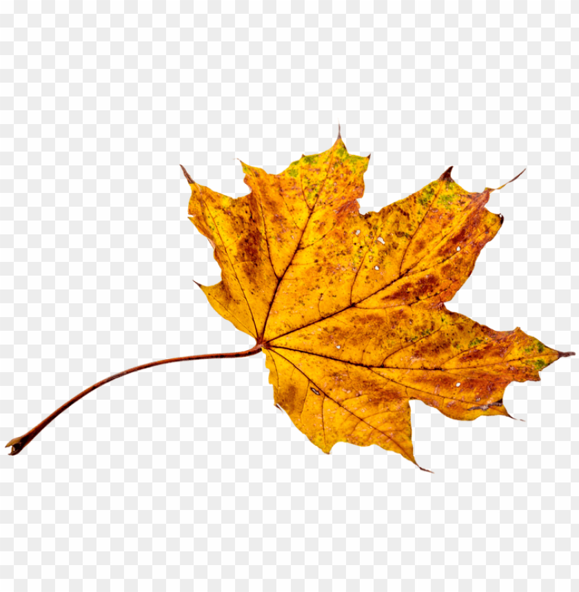 free PNG autumn, leaves, leaf, png, transparent, fall color - autumn leaves colors PNG image with transparent background PNG images transparent