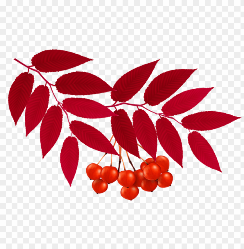 free PNG Download autumn red leaves decoration clipart png photo   PNG images transparent