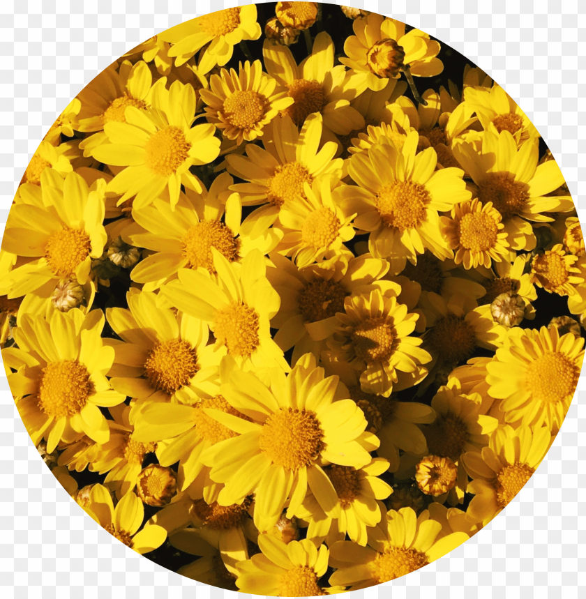 Icon Aesthetic Pastel Yellow Roblox Logo Background Aesthetic Yellow Flowers Tumblr Yellowflowers Yellow Aesthetic Sunflower Png Image With Transparent Background Toppng