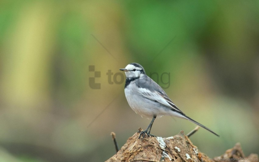 free PNG background, bird, blur wallpaper background best stock photos PNG images transparent