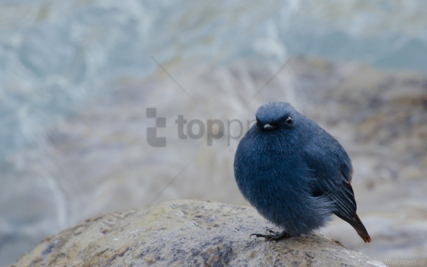 free PNG background, blur, bun, poultry, rock, sitting wallpaper background best stock photos PNG images transparent