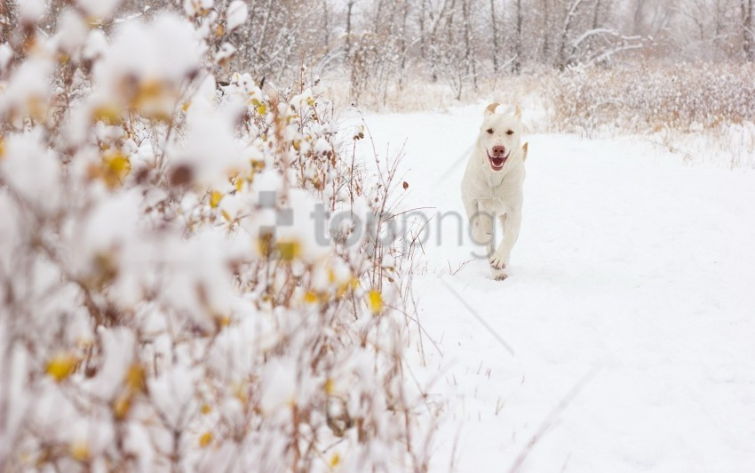 free PNG background, dog, snow wallpaper background best stock photos PNG images transparent