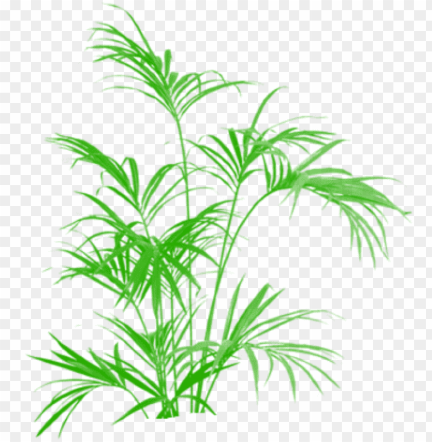 free PNG bamboo green tree clipart vector png, tree png plan, - kentia palm artificial 5 ft uk PNG image with transparent background PNG images transparent