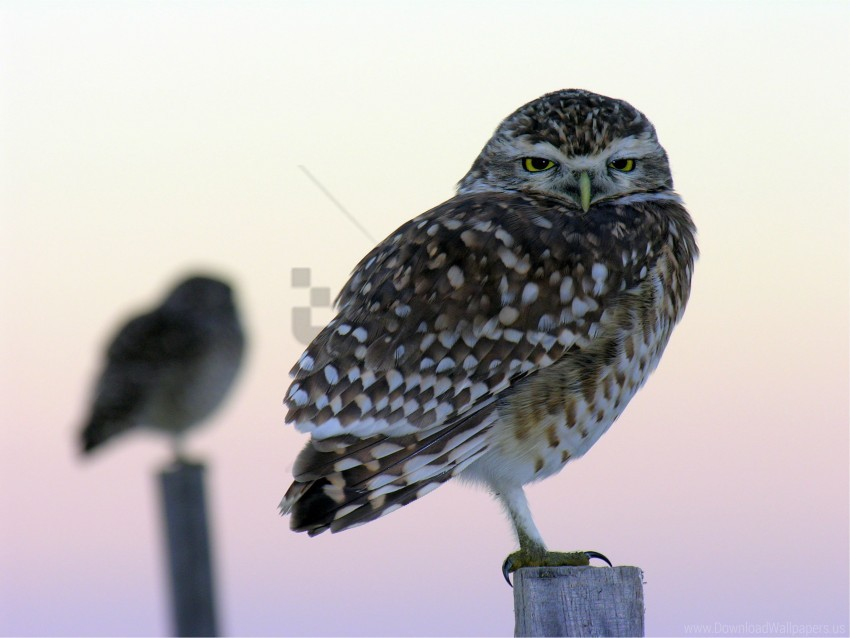 free PNG bars, birds, blurred, close up, owls, the owl wallpaper background best stock photos PNG images transparent