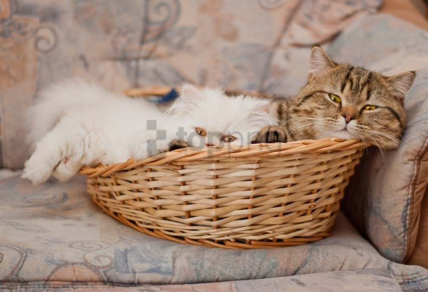 free PNG basket, cats, couple, lie wallpaper background best stock photos PNG images transparent