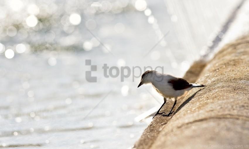 free PNG beach, birds, gulls, light wallpaper background best stock photos PNG images transparent