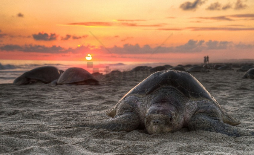 free PNG beach, sand, sky, sunset, turtle wallpaper background best stock photos PNG images transparent