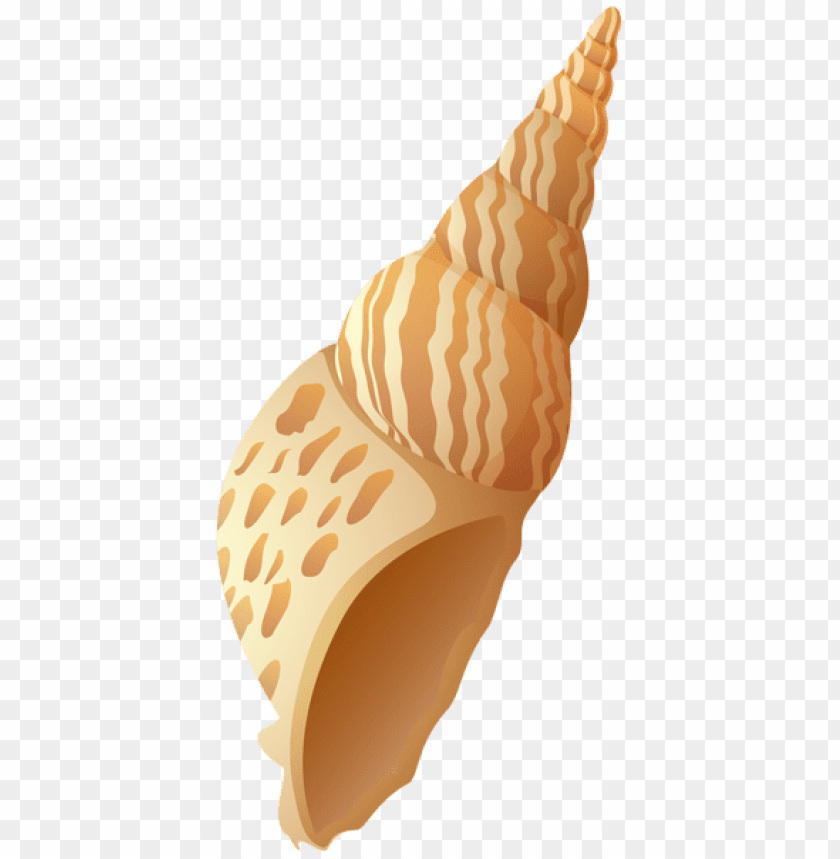 free PNG beach shell PNG images transparent