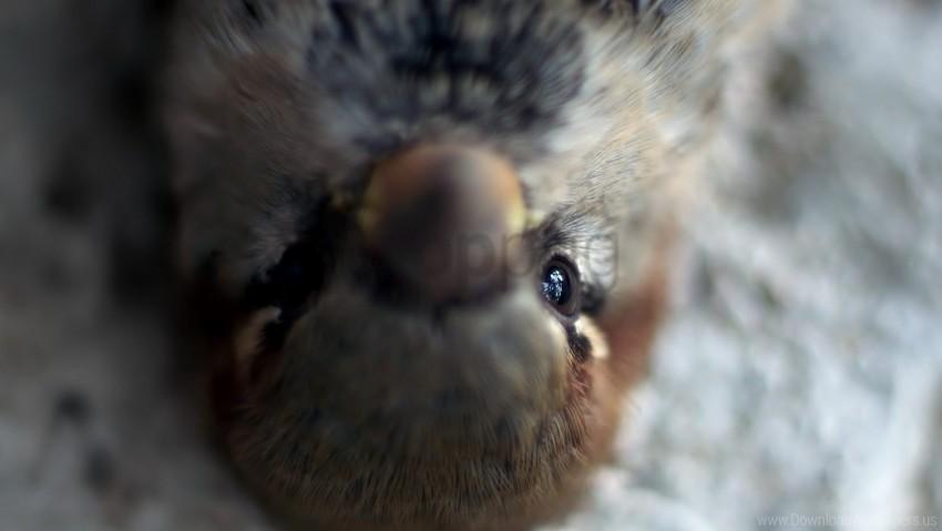 free PNG beak, bird, blurring, eyes wallpaper background best stock photos PNG images transparent