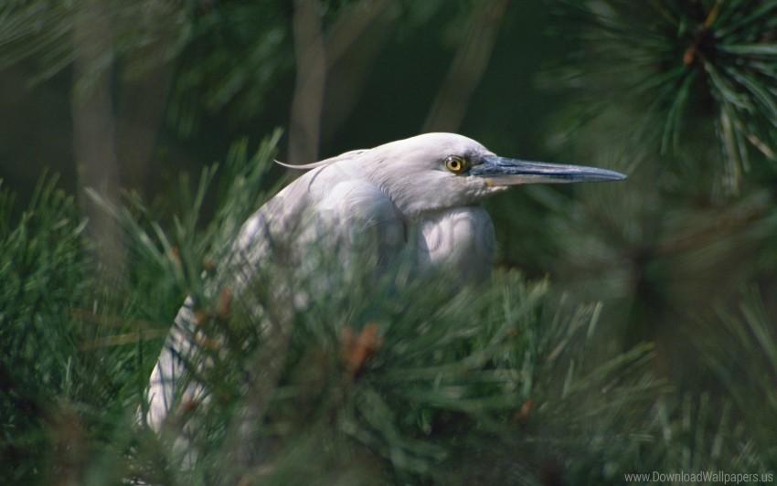 free PNG beak, bird, bushes, eyes, herbs, heron wallpaper background best stock photos PNG images transparent