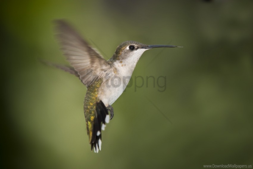 free PNG beak, hummingbird, wings wallpaper background best stock photos PNG images transparent
