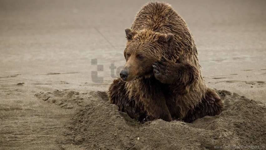 free PNG bear, playful, sand wallpaper background best stock photos PNG images transparent