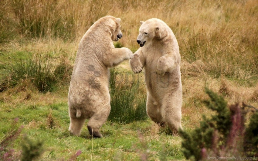 free PNG bears, grass, walk wallpaper background best stock photos PNG images transparent