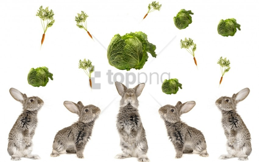 free PNG beautiful, cabbage, food, rabbits wallpaper background best stock photos PNG images transparent