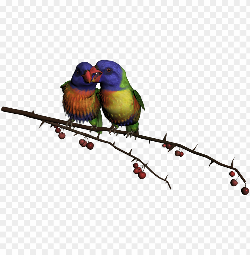 beautiful flying birds PNG image with transparent background | TOPpng