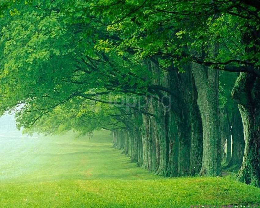 free PNG beautiful green forest background best stock photos PNG images transparent