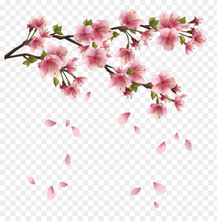 free PNG Download beautiful pink spring branch with falling petals png images background PNG images transparent