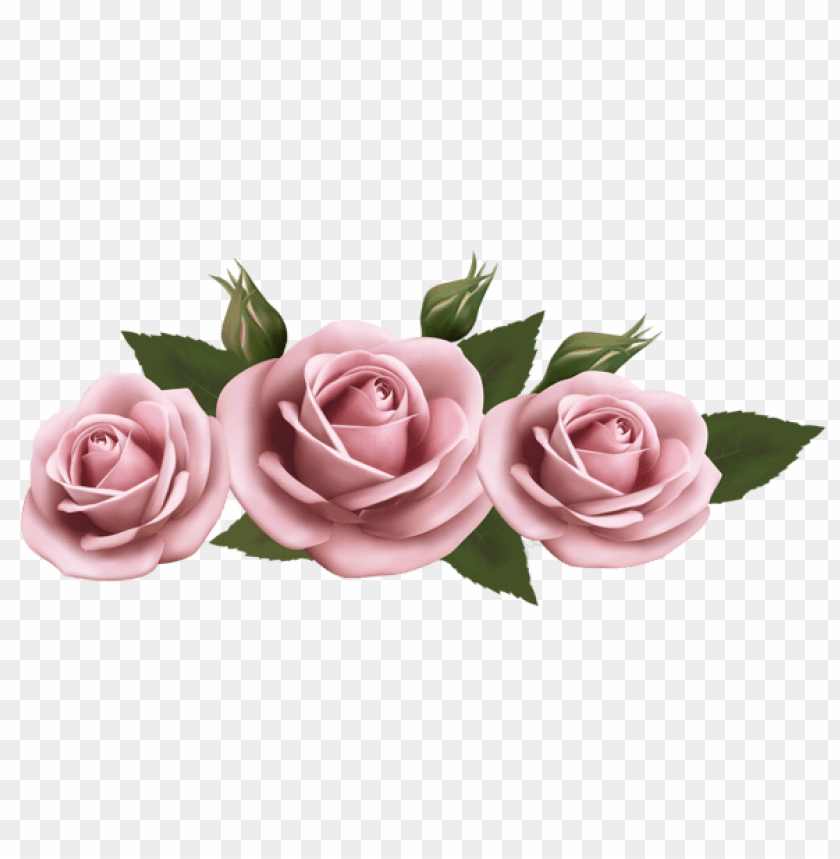 Download Beautiful Transparent Pink Roses Png Images Background Toppng