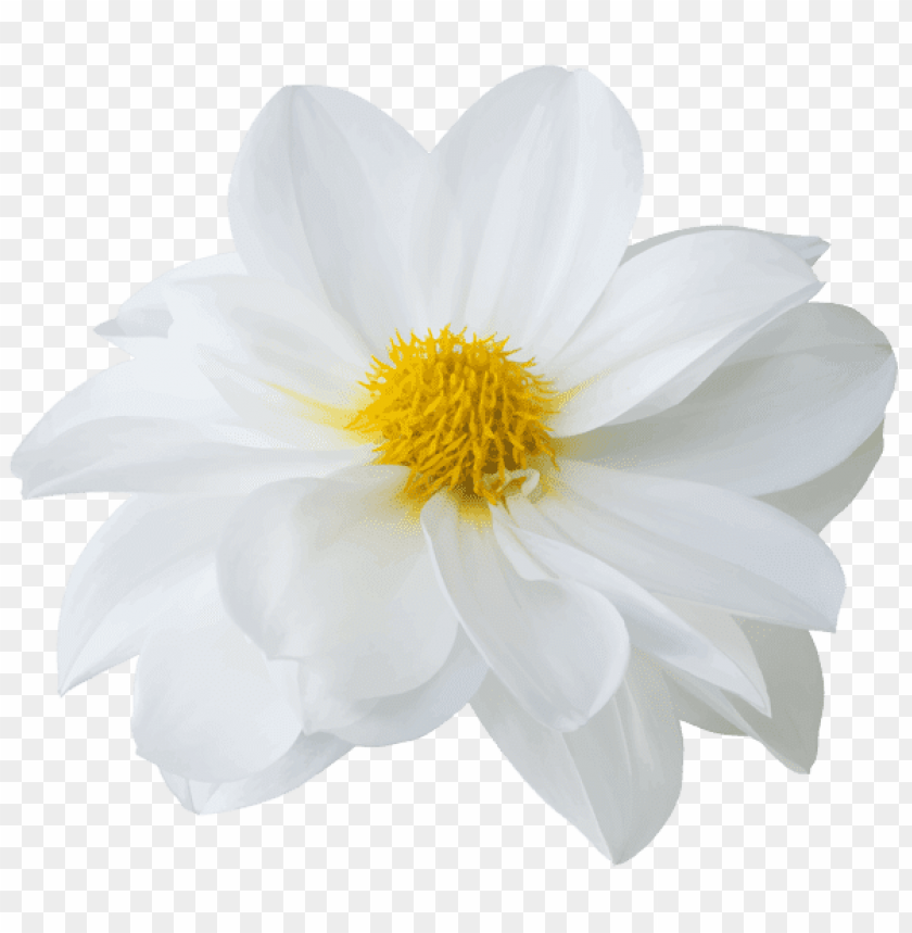 Download Beautiful White Flower Png Images Background Toppng