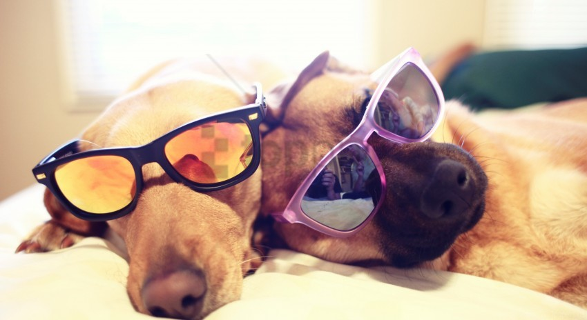 free PNG bed, dogs, dogs, glasses, lie wallpaper background best stock photos PNG images transparent