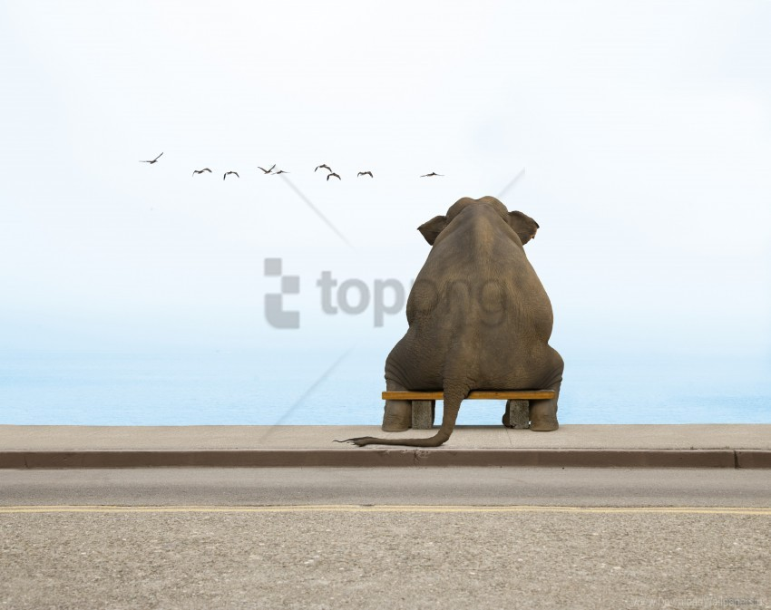 free PNG bench, elephant, seagulls wallpaper background best stock photos PNG images transparent