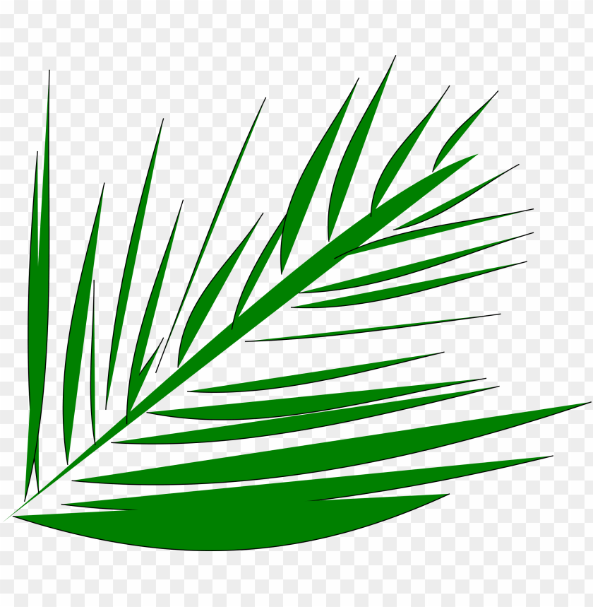 free PNG big image - palm leaves transparent clipart PNG image with transparent background PNG images transparent