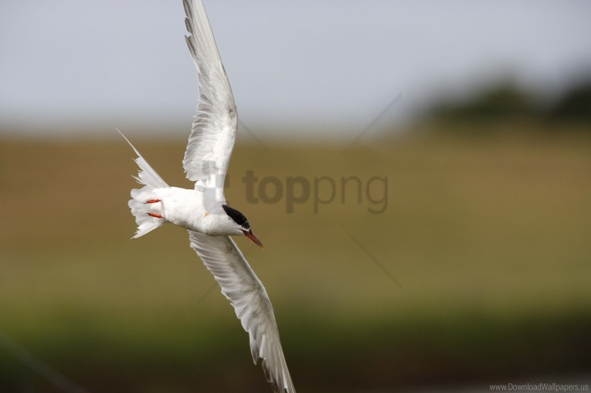 free PNG bird, blur, flying, seagull wallpaper background best stock photos PNG images transparent