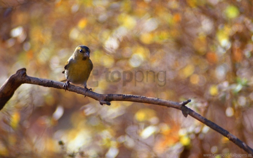 free PNG bird, bokeh, branch wallpaper background best stock photos PNG images transparent