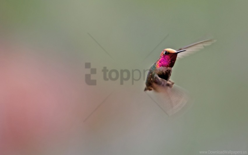 free PNG bird, flapping, hummingbird, wings wallpaper background best stock photos PNG images transparent