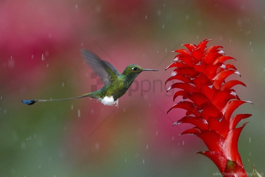 free PNG bird, flying, hummingbird, plant wallpaper PNG images transparent