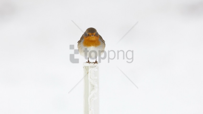 free PNG bird, sitting, wings wallpaper background best stock photos PNG images transparent