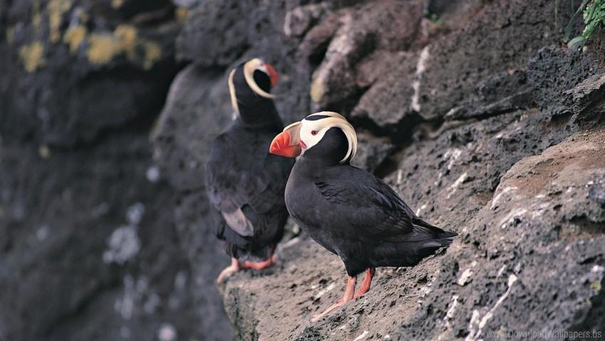 free PNG birds, cliff, red beak, rocks wallpaper background best stock photos PNG images transparent
