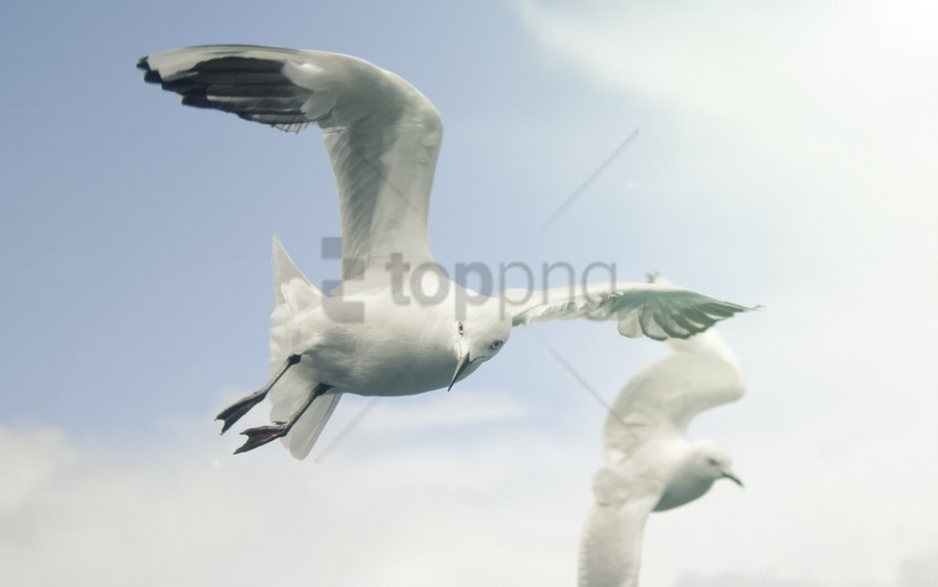 free PNG birds, flap, flying, seagulls, sky, wings wallpaper background best stock photos PNG images transparent
