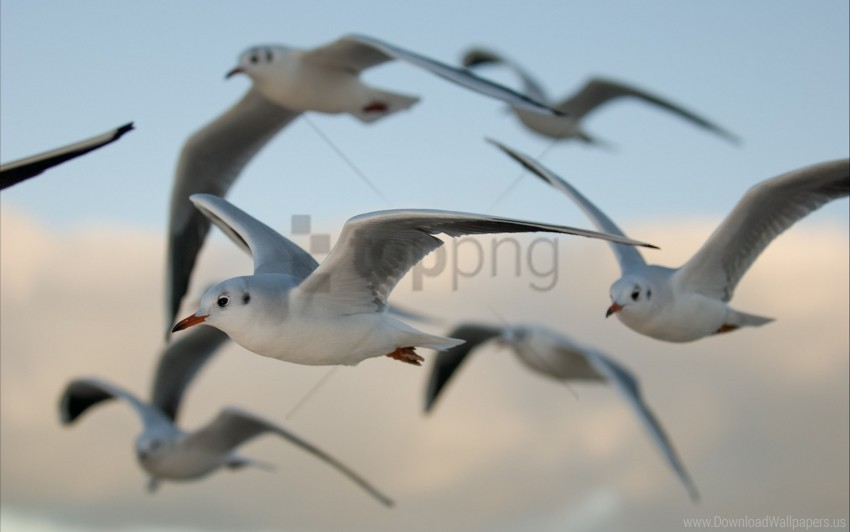 free PNG birds, flying, gulls wallpaper background best stock photos PNG images transparent
