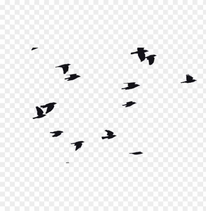 birds flying png bird png images vectors and psd files - flock birds