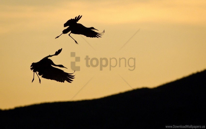 free PNG birds, pair, silhouette, sky, slope, stork wallpaper background best stock photos PNG images transparent