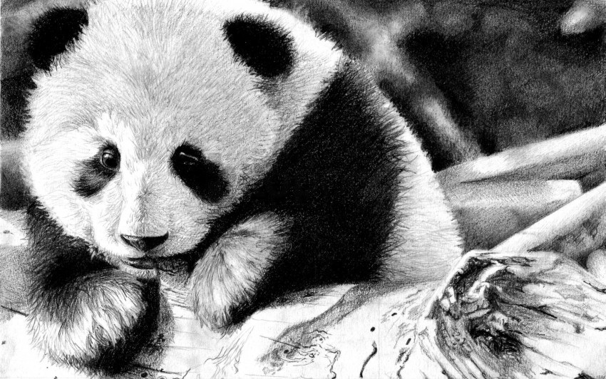Black And White Color Face Panda Wallpaper Background