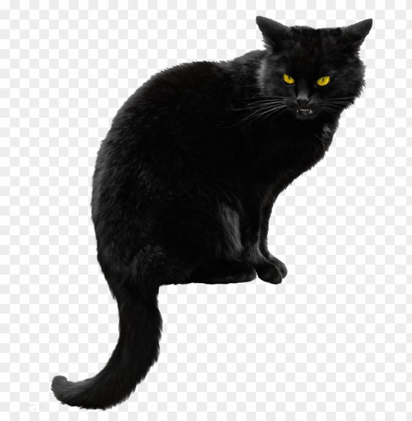 free PNG Download black cat png file png images background PNG images transparent