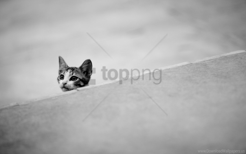 free PNG black white, ears, kitten, muzzle wallpaper background best stock photos PNG images transparent