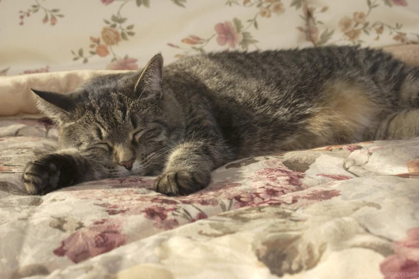 free PNG blanket, cat, lying, sleeping wallpaper background best stock photos PNG images transparent