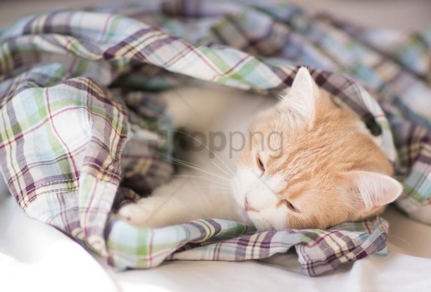 free PNG blanket, darling, kitten, sleep wallpaper background best stock photos PNG images transparent