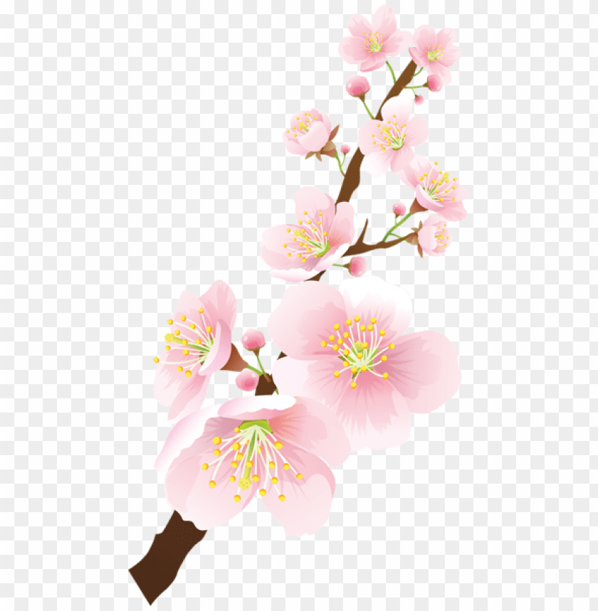 free PNG Download blooming spring branch png images background PNG images transparent